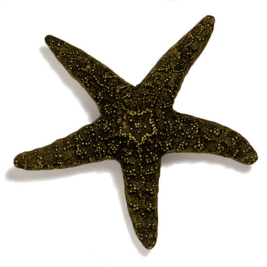 Modern Objects Scallops & Seahorses Collection 4-1/4'' W Large Starfish Knob in Antique Brass, 4-1/4'' W x 1-1/4'' D x 1-1/4'' H