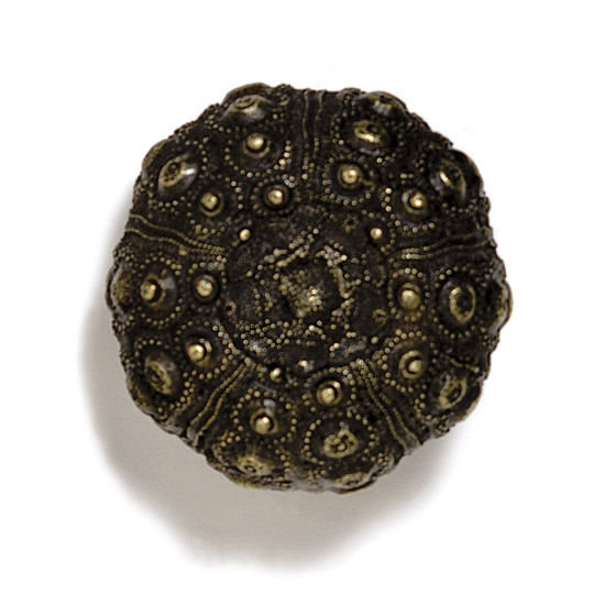 Modern Objects Scallops & Seahorses Collection 1-3/4'' Diameter Round Urchin Knob in Antique Brass, 1-3/4'' Diameter x 1-1/4'' D x 1-1/4'' H