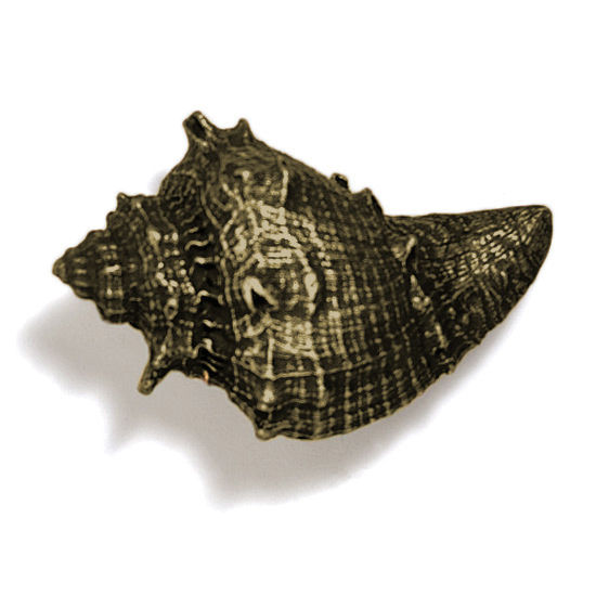 Modern Objects Scallops & Seahorses Collection 2-1/4'' W Whelk Knob in Antique Brass, 2-1/4'' W x 1-3/4'' D x 1-3/4'' H