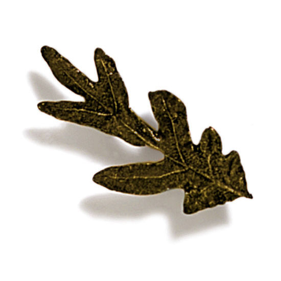 Modern Objects Pinecones & Jasmine Collection 2-1/4'' W Small Oak Knob in Antique Brass, 2-1/4'' W x 3/4'' D x 3/4'' H
