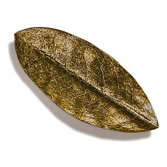 Modern Objects Pinecones & Jasmine Collection 5'' W Rhododendron Knob in Antique Brass, 5'' W x 3/4'' D x 3/4'' H